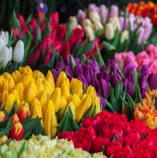 Хороскоп за днес 10 май-Рак-любов, Стрелец-приятно занимание, Овен-подкрепа