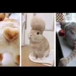 Домашни любимци със смешни прически (Снимки):