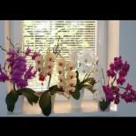 НИКОГА не поливайте орхидеята по този начин - обричате я на смърт!