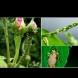 4 домашни убиеца на листните въшки - изтребват ги до крак!
