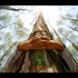 9 дървета с бяла енергия, които ще прогонят всяко зло от къщата: