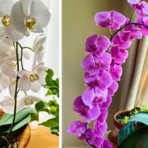 10 растения, които трябва да държите в спалнята си за по-добър сън, събират цялата негативна енергия о пречистват въздуха