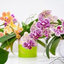 Орхидеята ми вече цъфти повече от 3 пъти годишно!