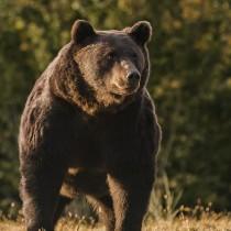 Жената, нападната от мечката в Белица разказа какво се е случило