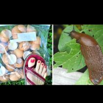 3 естествени начина да се отървете от охлювите в градината. Ще изчезнат веднага и завинаги!