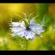 Божията билка от Библията - няма болест, която да не цели!