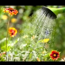 Как да поливаме градината в жегите, за да не уморим растенията - 7 безценни съвета: