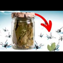 Край на мухи, комари или други досадни насекоми: Пригответе си домашен репелент и се притеснявате!