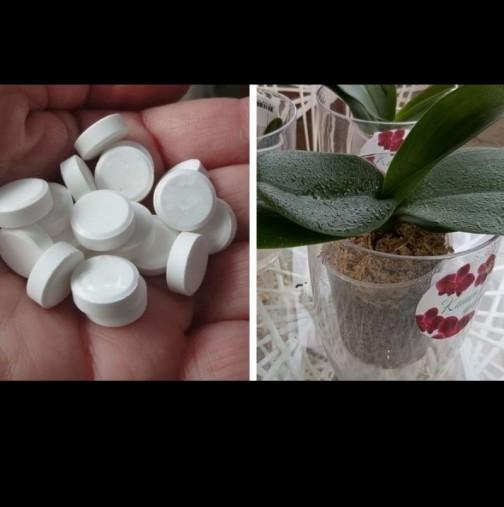 Аптечни хапчета за стотинки, които ще спасят орхидеите от болести и гибел: