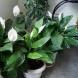 Цветята ви ще цъфтят непрекъснато само с една малка промяна в отглеждането им