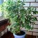 5 популярни стайни растения, които ни пазят от жегите у дома: