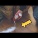Защо възрастните хора ръсят сол на прага?