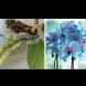 4 обикновени КИСЕЛИНИ връщат орхидеята към живот за 10 дни. Пуска нови корени и цъфти повече от преди: