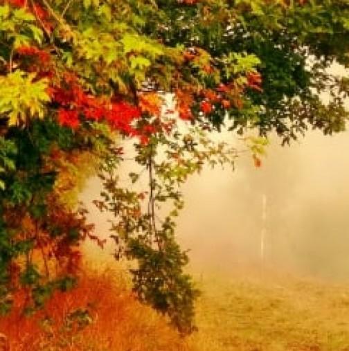 Хороскоп за днес 14 септември-Телец-Успешен и ползотворен ден, Козирог -Много любов