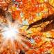 Хороскоп за утре 28 септември-КОЗИРОГ Успех и печалби, РИБИ Материален успех