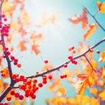 Хороскоп за утре 12 октомври-РАК Материален успех, ТЕЛЕЦ  Освободете се от притесненията