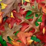 Хороскоп за утре 14 октомври-СТРЕЛЕЦ Материален успех, СКОРПИОН Кавги и неприятности