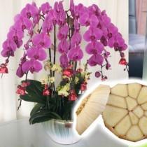 Пет скилидки чесън и орхидеята ви ще полудее от цъфтежи без да спира!