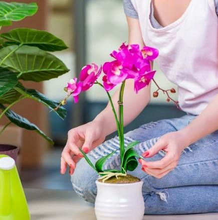 Тор за орхидея от картофена кора-И цъфти и ухае божествено