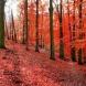 Хороскоп за днес 19 октомври-Телец-Раздяла с токсични хора, Лъв-Голяма адаптивност