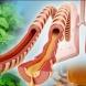 Тази година без хапчета, сиропи и антибиотици-Билките, които са полезни за белите дробове