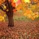 Хороскоп за утре 19 октомври- РИБИ  Успешен, но напрегнат ден, ВОДОЛЕЙ  Материален успех