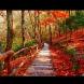 Хороскоп за утре, 17 октомври: БЛИЗНАЦИ - шанс за печалби; СКОРПИОН - осъществяване на желанията; СТРЕЛЕЦ - твърде успешен ден
