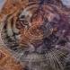 Хороскоп за година на тигъра 2022-Тигърът ще помогне на Водолея да изпълни всичките си мечти, Козирог-Много благоприятно време