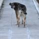 Бум на кучешка тения в Кърджалийско! Нови 8 души са регистрирани със заболяването!