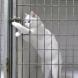 Вижте уникално видео на умно коте!