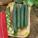 Опасни зеленчуци-убийци от Турция!