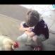 Видеото, което за 14 секунди трогна света!!!