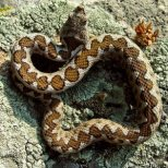 Какво да правим при ухапване от змия
