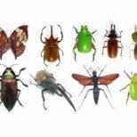 Как да се справим с насекомите в дома ни