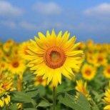 Терапията с цветя на д-р Бах срещу страх