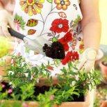 Как се пресаждат цветя в саксия