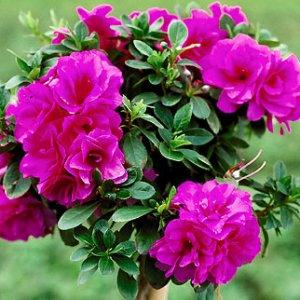 Кои цветя пречистват въздуха у дома