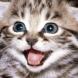 Невероятно! - Котка спаси дете от тежък инцидент