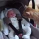 Коте вижда бебе за първи път. Вижте как реагира! (Видео)