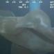 Мистериозно същество кръстосва дълбините на океана-Видео
