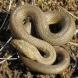 Змия пропълзя в двор на детска градина