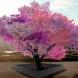 Дървото, което ражда 40 вида плодове