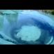 Тайнственото живо езеро, което ще ви погълне за миг (видео)