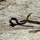 Змия падна от небето върху мъж на плажа