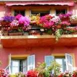 Домашни растения - лечители - Вижте ги