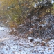 Синоптиците обявиха датата на първия сняг - Съвсем скоро е!