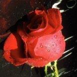 Цветен зодиак-Виж кое цвете си