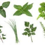 Кои билки лекуват от депресия