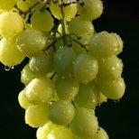 Диета с грозде за сваляне 3-4 кг