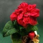 Как да отглеждаме цветята през зимата